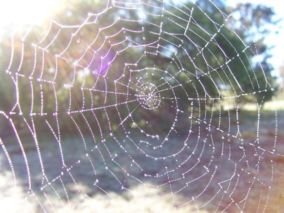orb-spider-web